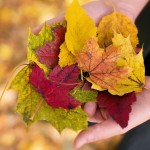 fall-leaves-1010579_960_720